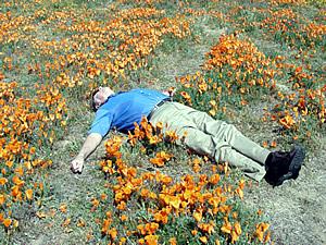 Husband relaxing in the poppy field