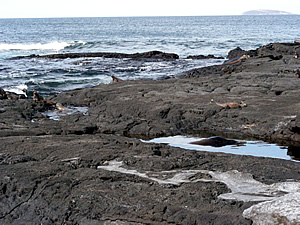 Along the rocky shore of a Galapagos Island