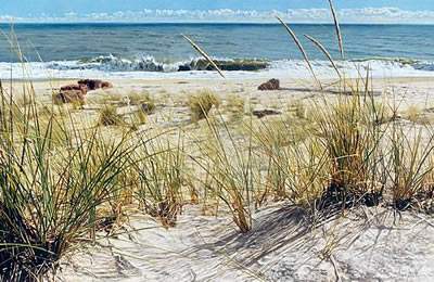 Sandy beach with grasses and ocean
