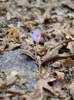 Flower all alone
