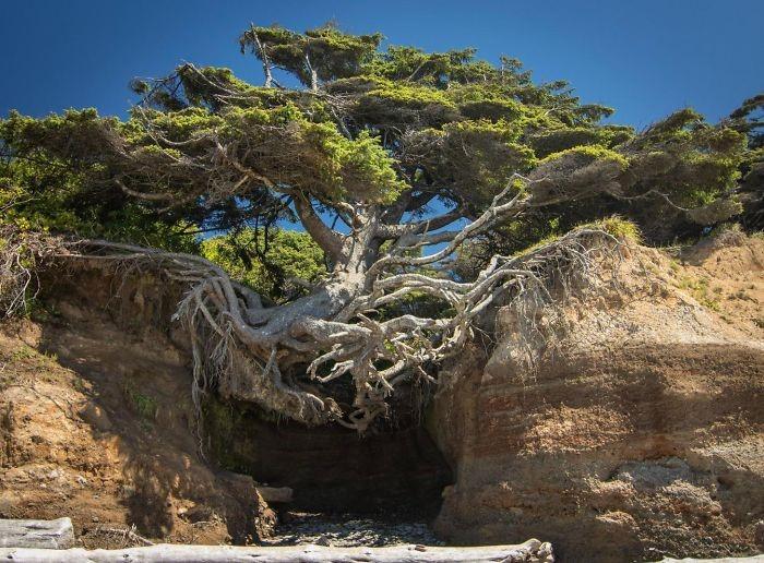 25-Tree of life