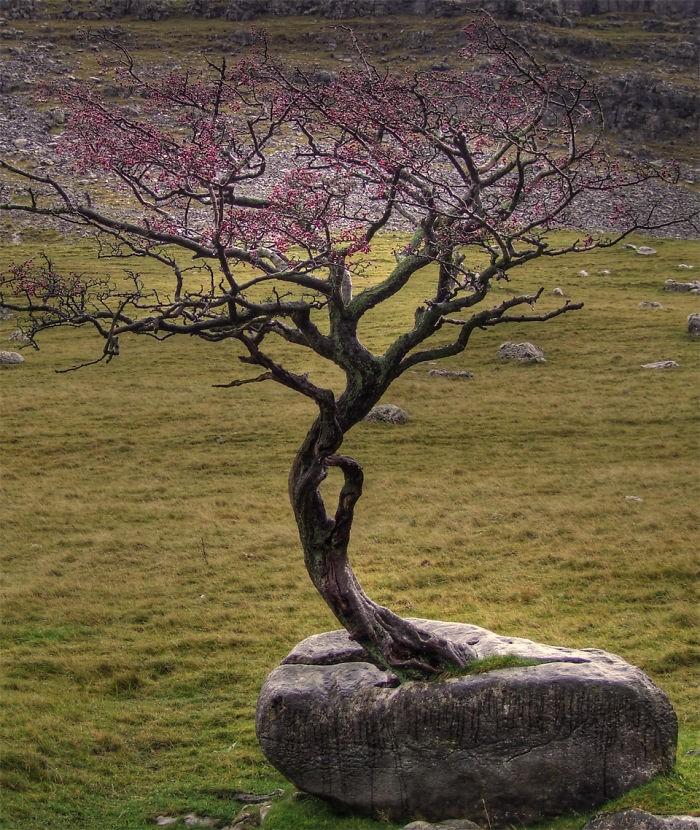 25-Tree rock