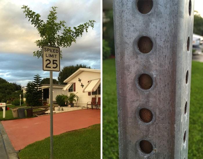 25-Tree sign 1