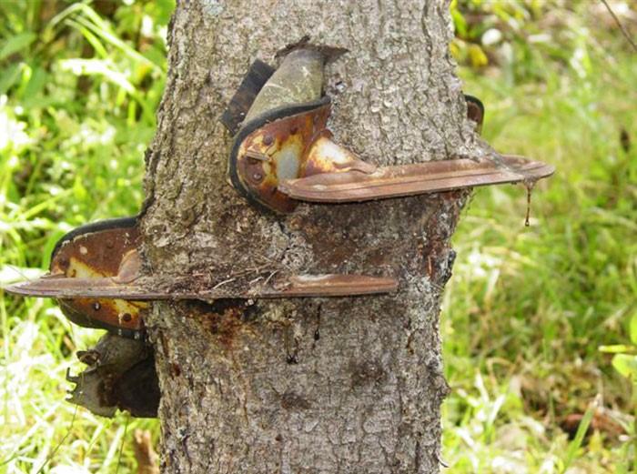 25-Tree skates