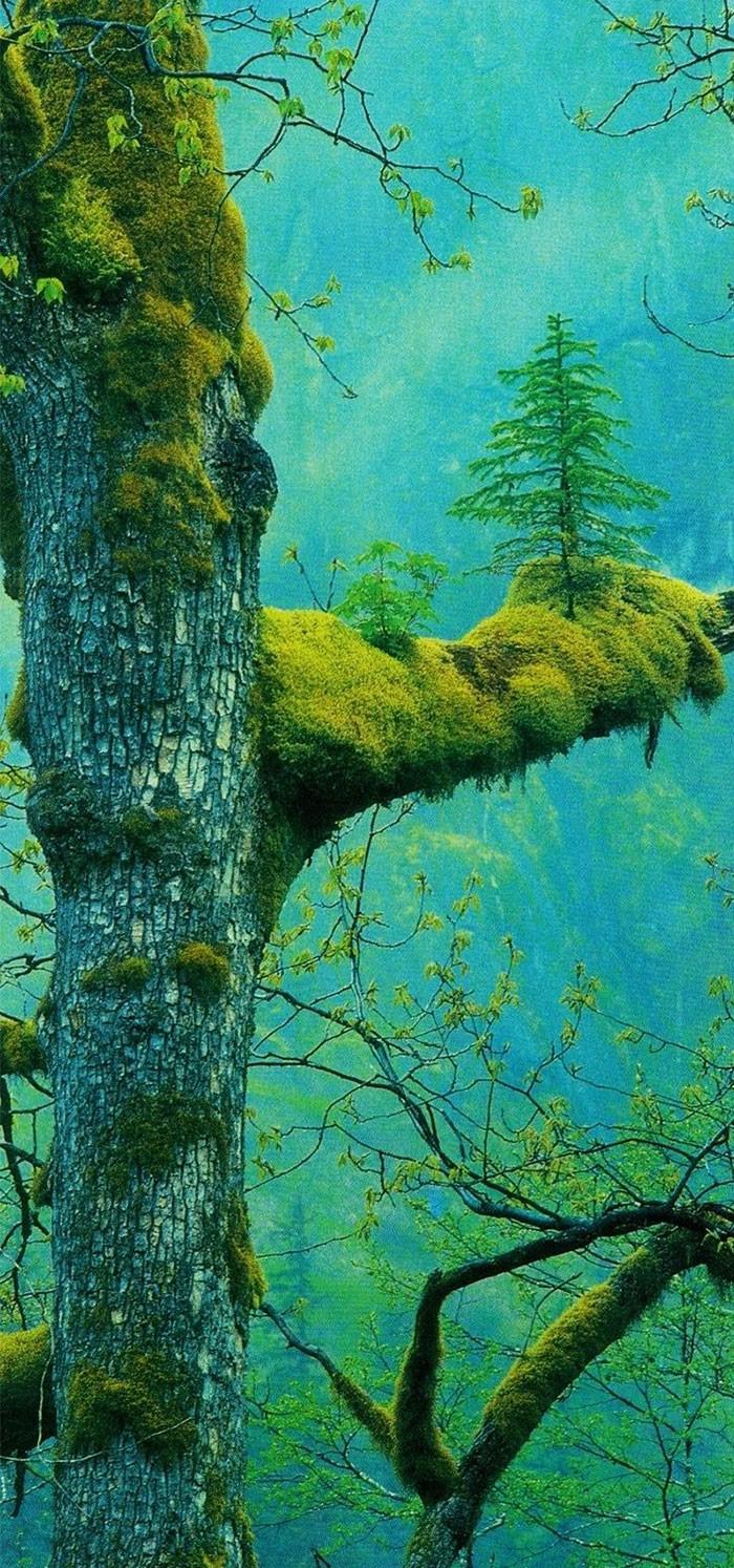 25-Tree tree