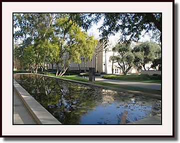Water Lily Pond at Caltech